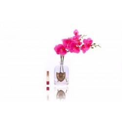 Orchidée parfumée Côte Noire
